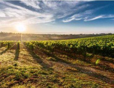 Experiencias agrícolas primavera 2017