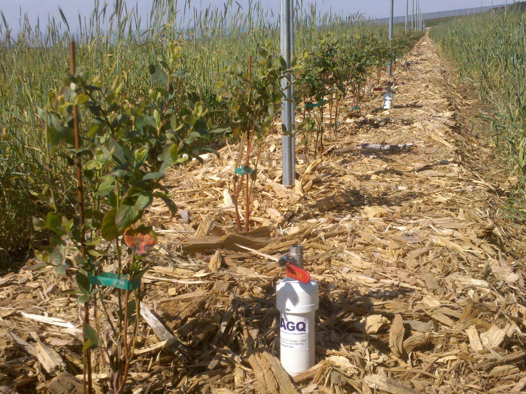 seguimiento nutricional de cultivos