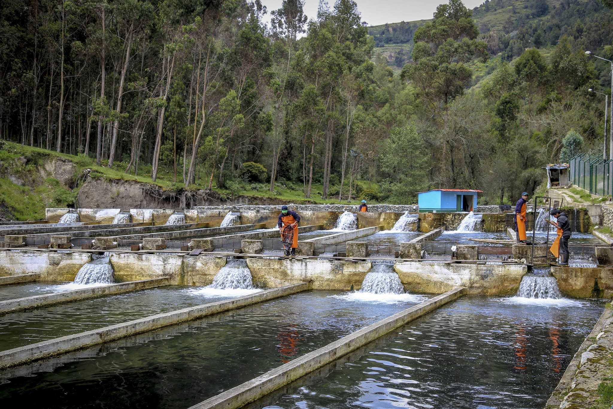Servicios analíticos para la actividad acuícola