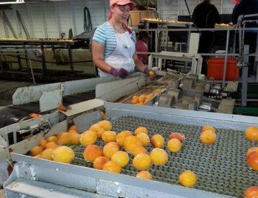 Control microbiológico en plantas agroexportadoras