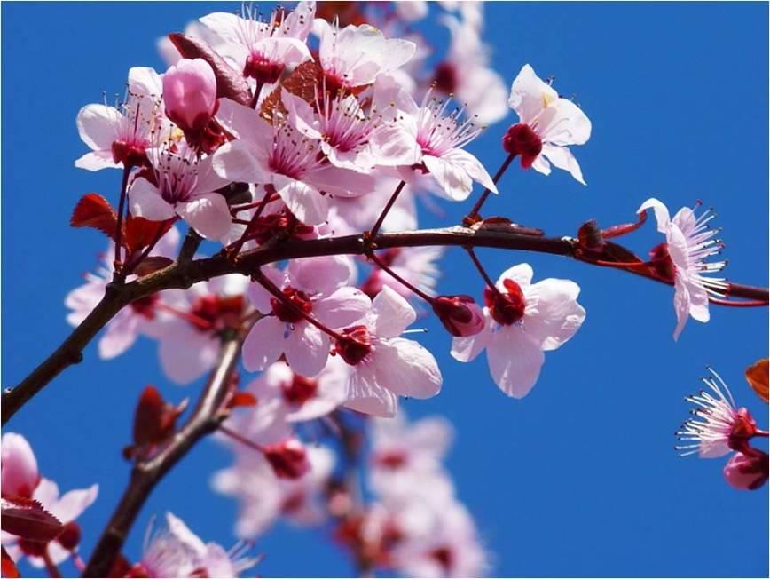 Charla sobre el manejo del cultivo de almendro