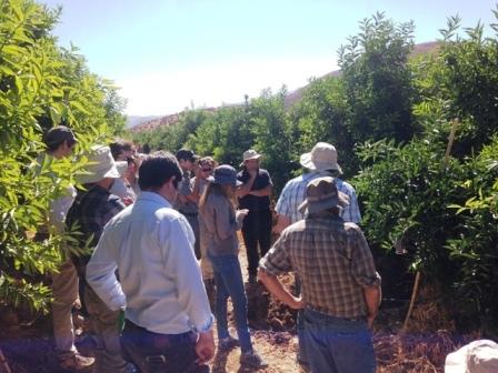 Día de campo sobre cultivo de Cítricos en Ovalle