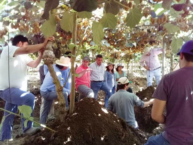 AGQ Labs Agronomía en grupos de cultivo de kiwi