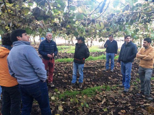 AGQ Labs en grupos de trabajo en cultivo de kiwi