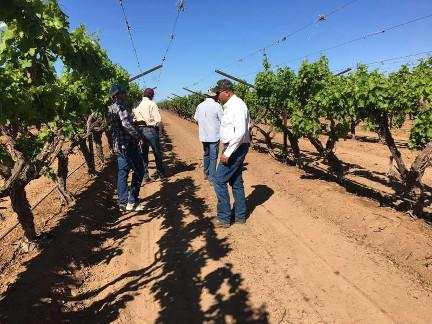 Visita técnica a cultivos de uva de mesa en México