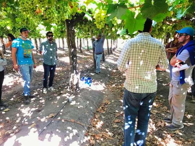 Manejo nutricional de uva de mesa en Aconcagua