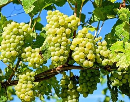 Reservas en vides y frutales de hoja caduca